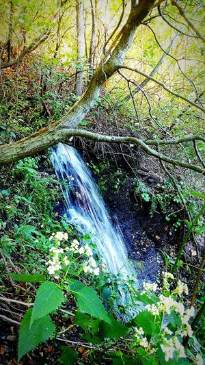 Forest Waterfall Scenics Beauty In Nature Motion Environment Tranquil Scene Non-urban Scene WoodLand Growth