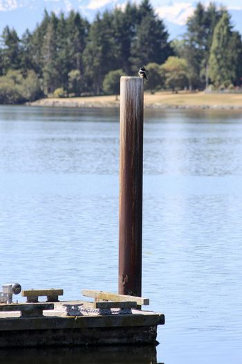 Wooden post in lake against trees