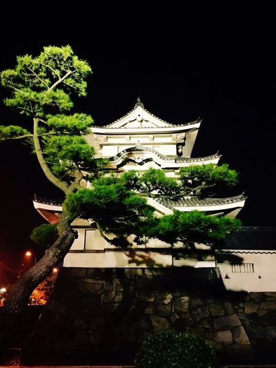 Tree Architecture No People Night Building Exterior Place Of Worship Outdoors Sky
