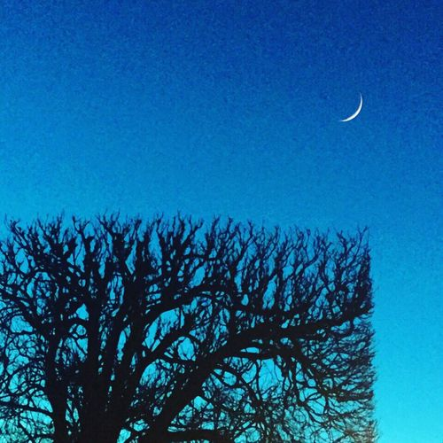 MathemARTics: the square has Tree sides. Moon Magic Hour Blue Geometry Showcase: March