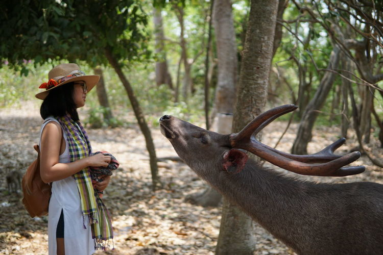 Deer Feeding Animals Zoo Adult Animal Wildlife Casual Clothing Clothing Day Deer Moments Hair Hairstyle Hat Land Leisure Activity Mammal Nature One Person Outdoors Side View Standing Three Quarter Length Tree Waist Up Wild Life Women