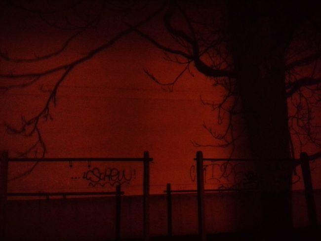 Darkness And Light Red Dark Evening Evening Walk Street Street Light Street Lighting Ugly Shadow Light And Shadow Plant Plant Shadow