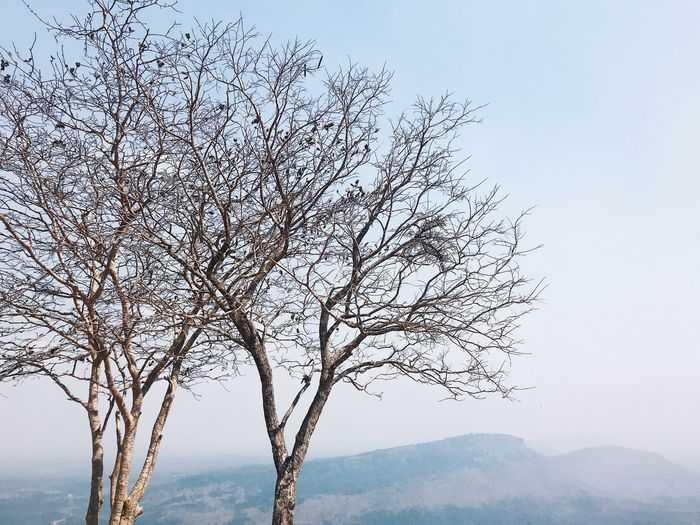 The Fall, The Fallen Tree Photography Treescollection Mountain View Tree And Sky Dry Blue Sky Fog Winter Fall Thailand Tree Beauty In Nature Nature Tranquility Bare Tree Tranquil Scene Branch Mountain Outdoors Sky Scenics No People Day Clear Sky Low Angle View Landscape