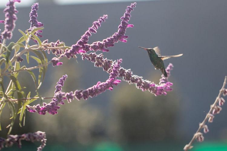 Birds flying over pink flowers