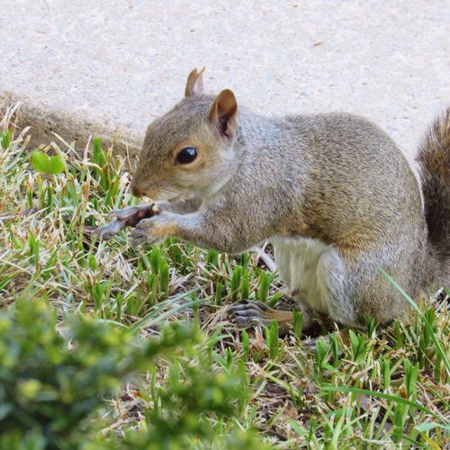 Young squirrel raiding the bird's seed 😄 Squirrel Animal Animal Themes Animal Wildlife Side View Close-up High Angle View Nature Animals In The Wild
