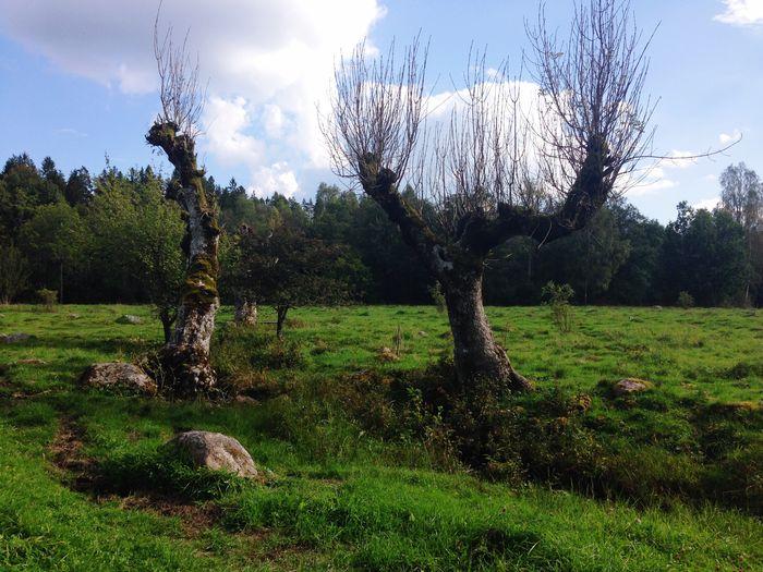 On A Hike SummerinSweden Farmandsku Takeawalk  Mölarp Natureislife Naturliv