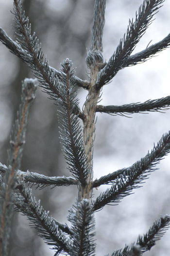 Tree Winter Cold Temperature Branch Nature Snow Close-up Frozen No People Forest Outdoors Beauty In Nature Sky Day Christmas Cold Christmastime Backgrounds Chrixxo Abstract Beauty In Nature Art Winter Ice Tree