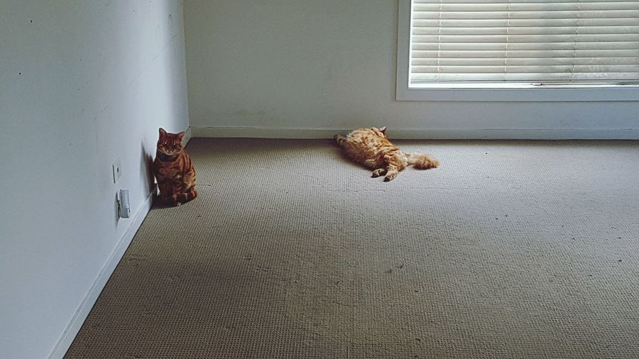 EyeEm Selects Domestic Cat Mammal Pets Sitting Animal Themes No People Home Interior Indoors  Day First Eyeem Photo