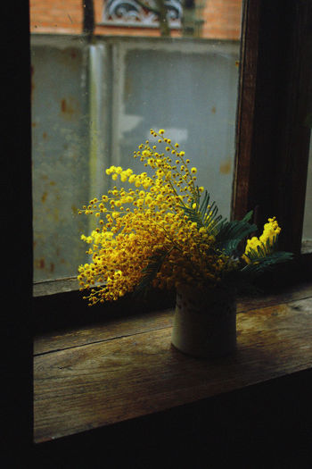 Plant Growth Nature No People Window Indoors  Vulnerability  Freshness Flower Flowering Plant Beauty In Nature Wood - Material Flower Arrangement Window Sill Flower Pot Yellow Fragility Day Window Frame Potted Plant Close-up Flower Head Houseplant The Week on EyeEm