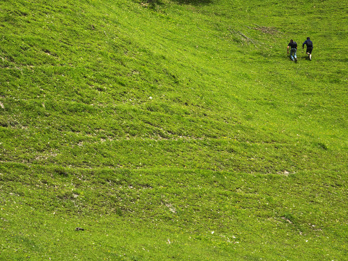 Two young men climb up the steep slope of a mountain covered with green grass Climb Up Grass Green Young Adult Beauty In Nature Day Field Grass Grass Area Green Color Growth Leisure Activity Lifestyles Mammal Men Mountain Nature Outdoors People Real People Scenics Slope Steep Togetherness Tranquil Scene Two Two People Walking Women