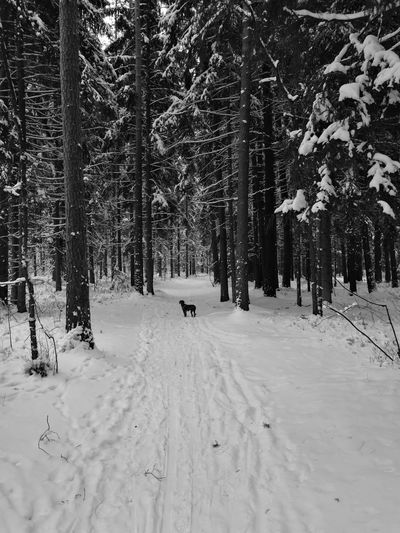 Snow Tree Winter Cold Temperature Nature Landscape Beauty In Nature Outdoors Forest Day Scenics No People Animal Themes Mammal Winter Forest Snowy Forest Bavarian Mountain Hound