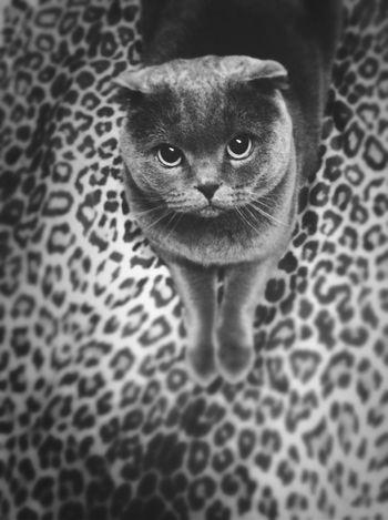Cat Monochrome Black And White Black & White