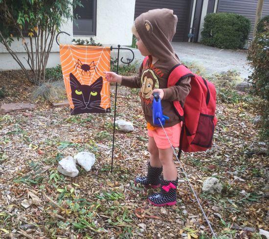 Halloween Cute Autumn Play Little Blond Girl Childhood Outdoors Blond Hair Kids Fallen Leaves in Sonoma County CA Santa Rosa