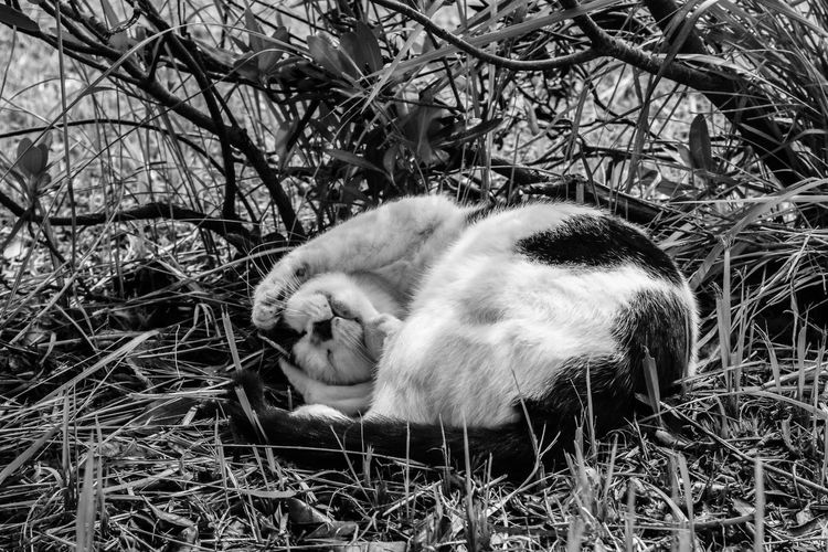 Cat sleeping in the ground
