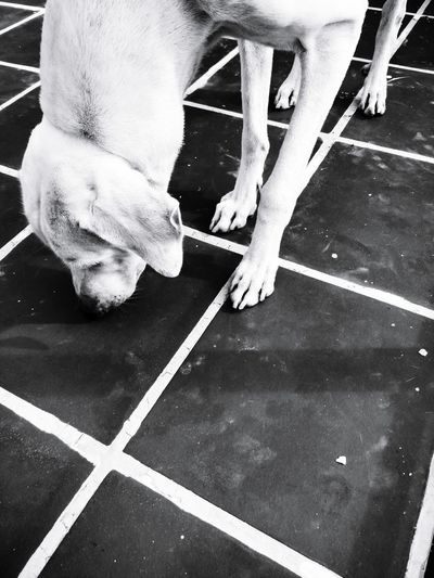 Lines Lines&Design Intersection Shadows & Lights Monochrome Blackandwhite Bnw India Prespective Dogs Dog Dogs Of EyeEm Oneplus Black Background Outdoors Puppy White Black Abstract Fineart Contrast Dogs Life The Week on EyeEm EyeEm Best Shots EyeEm Gallery EyeEm Best Shots - Black + White