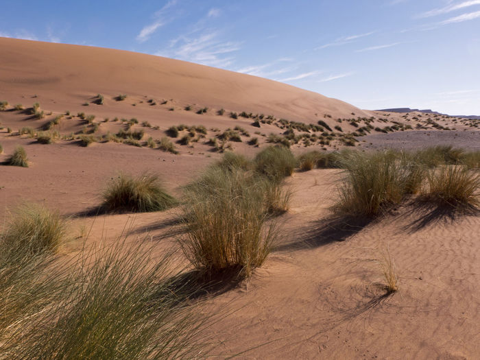 Hike through the Sahara desert in the south of Morocco Desert Sand Land Sky Scenics - Nature Climate Arid Climate Landscape Environment Sand Dune Day Beauty In Nature Tranquil Scene Nature Tranquility Outdoors Sahara Morocco Erg Chebbi Africa Dunes Grass Semi-arid Cloud - Sky Plant