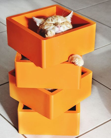Nap Time Sleeping Cat Cat EyeEm Selects Box Box - Container Cardboard Container Cardboard Box Paper High Angle View Indoors  Orange Color Crate