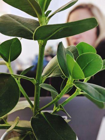 Leaf Herbal Medicine Close-up Plant Green Color