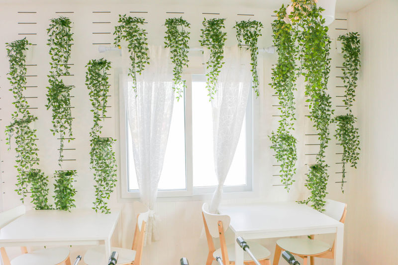 Plants hanging from wall in cafe