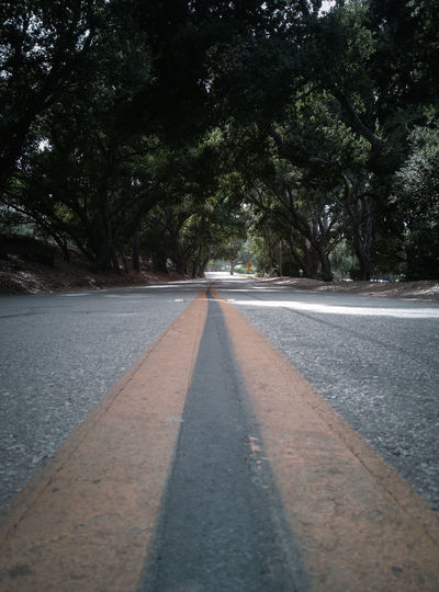 Surface level of empty road along trees