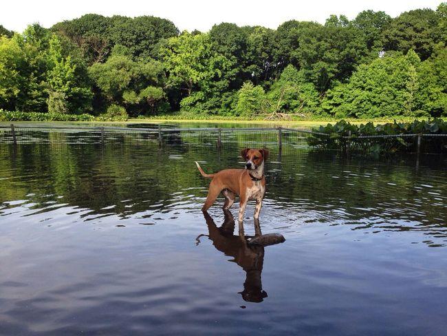 Dog Pond