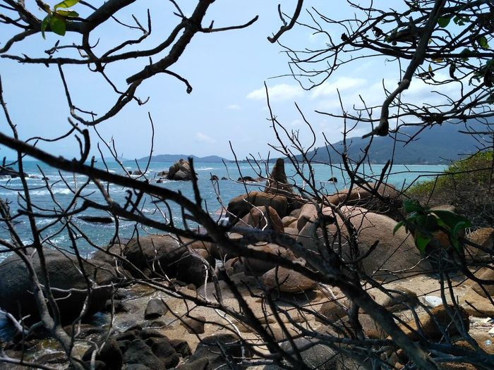 Ko Samui, Thailand Nature Tree Branch Outdoors Day No People Bare Tree Beauty In Nature Sky Tranquil Scene Vacations Horizon Over Water Wave Stone Rocky Mountains Cloud - Sky Sea And Sky Archipelago Sea Life Beauty In Nature Water Landscape Tranquility Nature Rock - Object