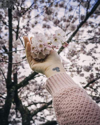 Human Hand Plant Hand Flower Flowering Plant Nature Tree Holding Personal Perspective Focus On Foreground Close-up Flower Head Springtime Girl With Tattoos Hand Tattoo Cherry Blossom Pink Flower Blooming Tree Low Angle View Blurred Background Pink Color Flowers Spring Cherry Tree Blooming Springtime Decadence