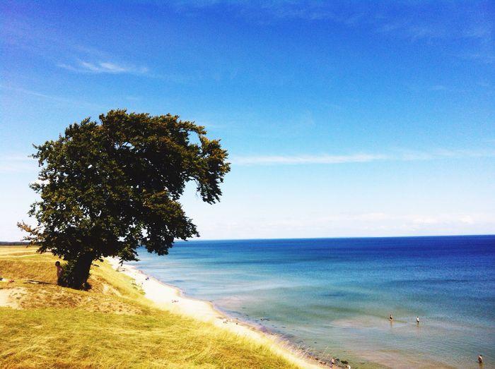 Tree on beach