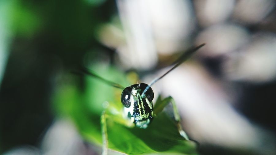 Grass hopper First Eyeem Photo