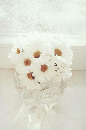 Flowers Wintertime
