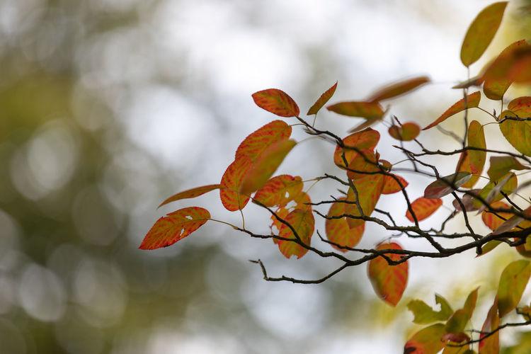 Close-up of orange tree