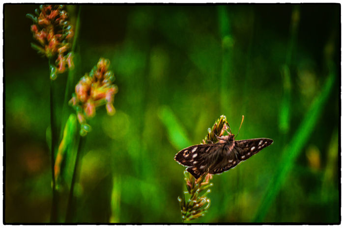 Animal Animal Themes Beauty In Nature Butterfly Close-up Cruagh Woods Day Dublin Dublin Mountains Focus On Foreground Green Color Growth Insect Ireland Irelandinspires Ireland🍀 Nature No People Outdoors Plant Selective Focus Wildlife