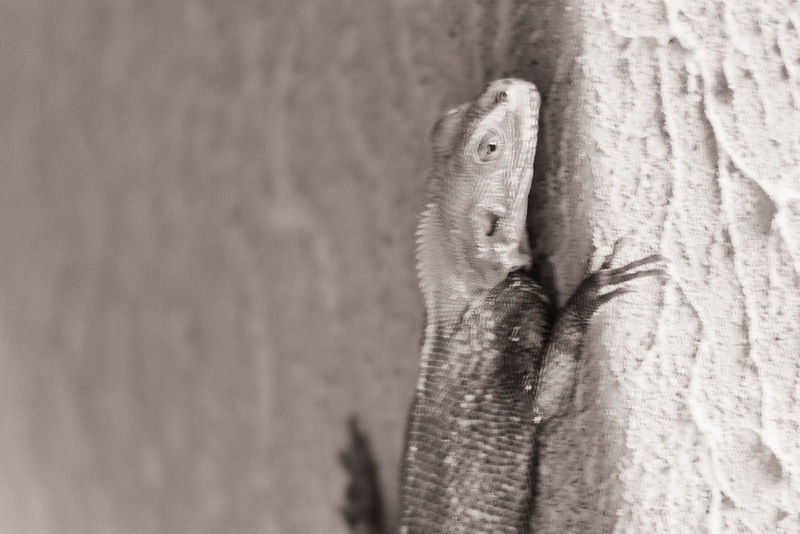 Animal Body Part Animal Head  Beauty In Nature Biology Lizard Lizards Nature No People Reptile Wall Climber