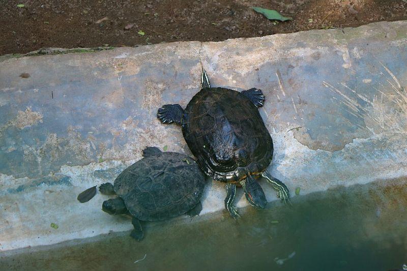 Animal Themes Water Chance Encounters Turtle 🐢 Turtles Turtle Love Nandankanon Nandankanan Bhubaneswar Bhubaneswar,india Always Be Cozy