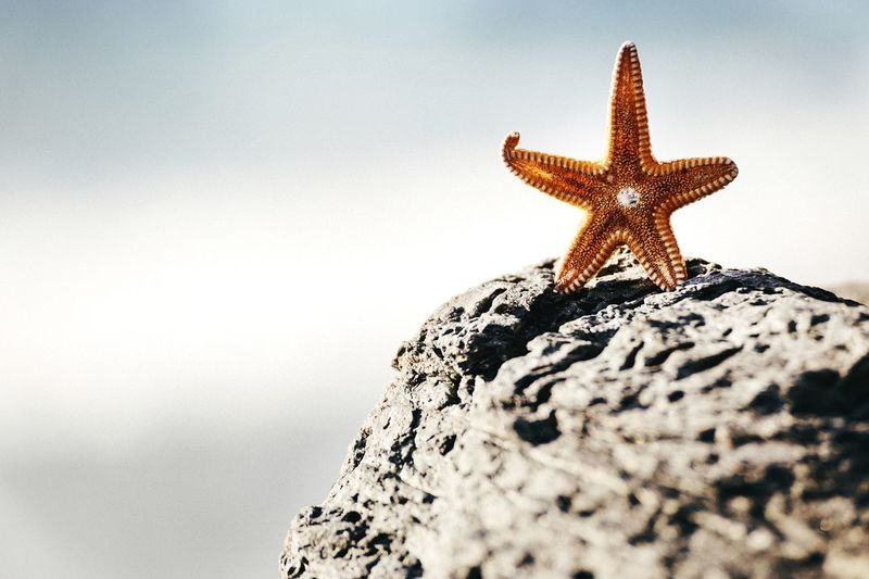 Lost star! Open Edit Beach Starfish  Nature EyeEm Nature Lover Almuñécar Coral By Motorola
