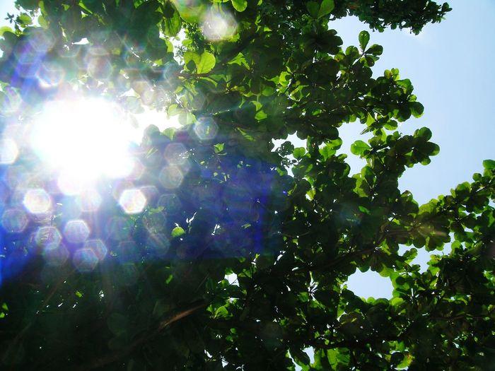 Sunlight Shinny