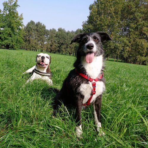 Dog Love Doglife Dogs Doglover Dog❤ I Love My Dog Dog Days Doggie My Dogs Are Cooler Than Your Kids My Dogs