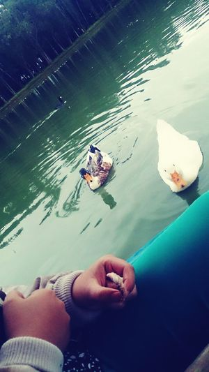 Ducks ♡ Walking Around Relaxing Capture The Moment Escaping Check This Out Enjoying Life It Was Cold That Day