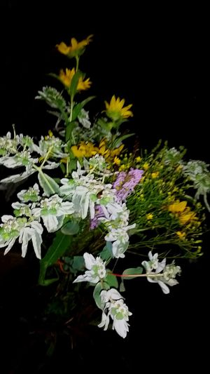 bouquet of flowers i found at a friendlys pond Friendly Adventures At The Pond Pondscum Flowerporn Flowerlovers Flowerfriendlys The Pursuit Of Happiness Love Life VSCO Flowerchildforever 💕 Femalephotographerofthemonth Naturelovers For Tinder Oklahoma Fall Popular Photos Naturephotography Fibonacci Pond Life Blurred Lines Bonfire Night Symmetry Spiral Yellow White