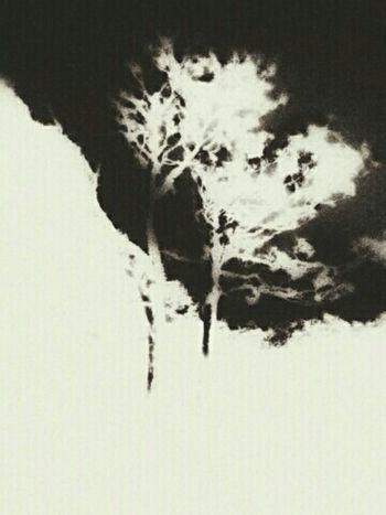 Trees Treeart Getting Creative Abstractart