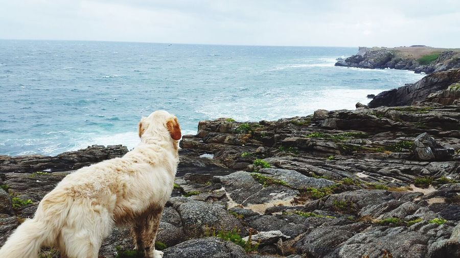 Rear View Of A Dog Standing On Beach