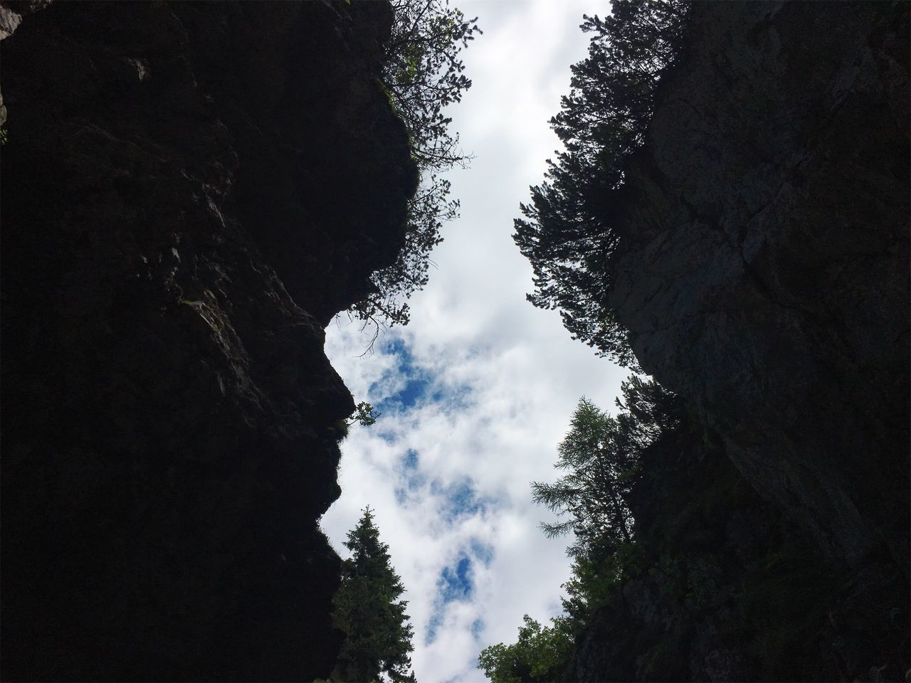 nature, tree, cloud - sky, beauty in nature, sky, day, no people, low angle view, scenics, outdoors, tranquility, forest, growth, mountain