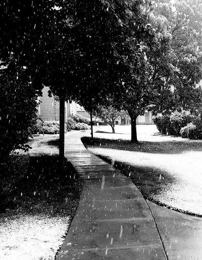 Snowy Sidewalk in . . . May? Outdoors Tranquil Scene Snowscape Snowy Trees Snow Day Snowy Morning Snowy Walk Sidewalk Sidewalk Photography Sidewalk In A Snowy Spring Snowy Spring Colorado Photography Black And White Photography Fort Collins, Co