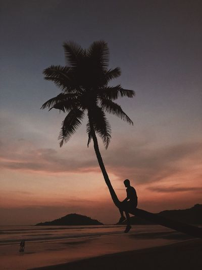 Silhouette Man Sitting On Palm Tree At Beach Against Sky During Sunset