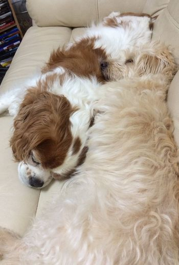 I Love My Dog Domestic Domestic Animals Pets Mammal One Animal Animal Themes Animal