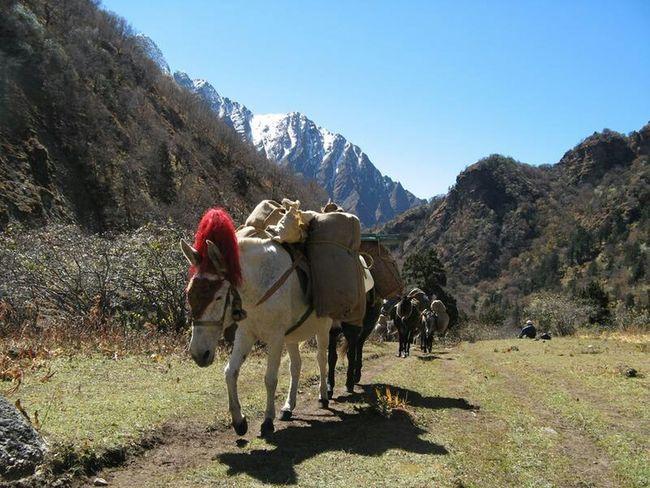the great outdoors - 2015 eyeem awards Service Animals Unedited Photo Bhutan Bhutan trekking