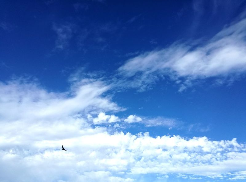 Flying Sky Cloud - Sky Airshow Low Angle View Blue No People Beauty In Nature Bird Flying In Sky Bird In Flight Bird Flying High Clouds And Sky Cloudly Day White Clouds And Blue Sky