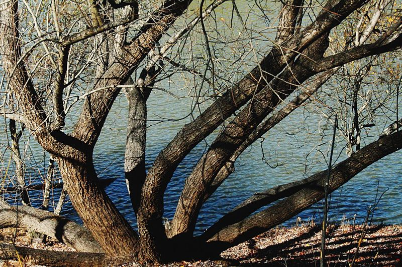 Bare tree by water Tree By Water No Leaves On Tree