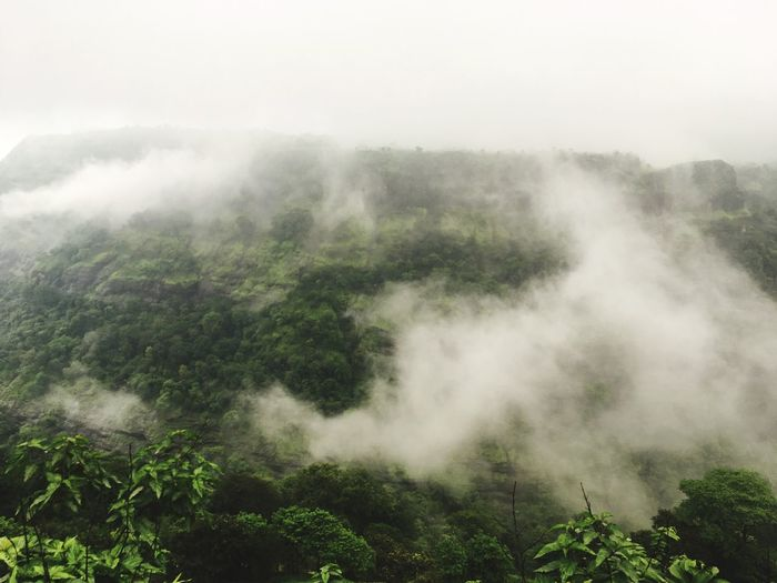 Fragility Nature Fog Beauty In Nature Mist Scenics Tranquil Scene Tree No People Tranquility Foggy Landscape Outdoors Idyllic Day Hazy  Green Color Growth Plant Water Sky Amrutanjan Point Lonawala Shades Of Winter