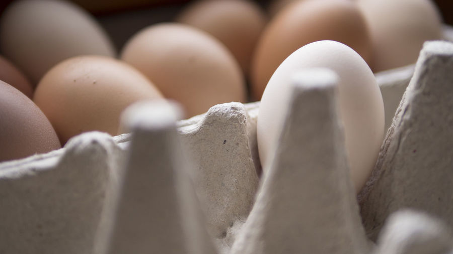 Close Up Of Egg Carton